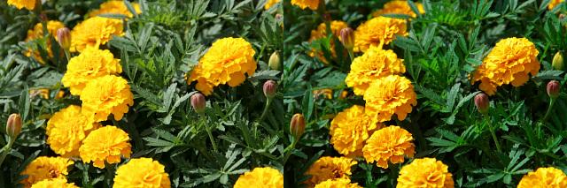 左が「カメラが現像したJPEG」、右が「SilkyPix2での現像結果」